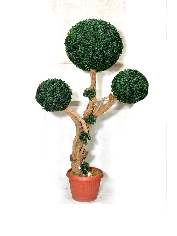 Evergreen Littell Boxwood Planter