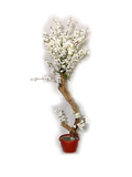 White Daisy Planter