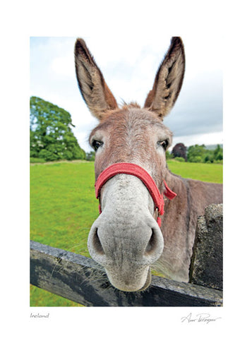 Irish Donkey Blank Card