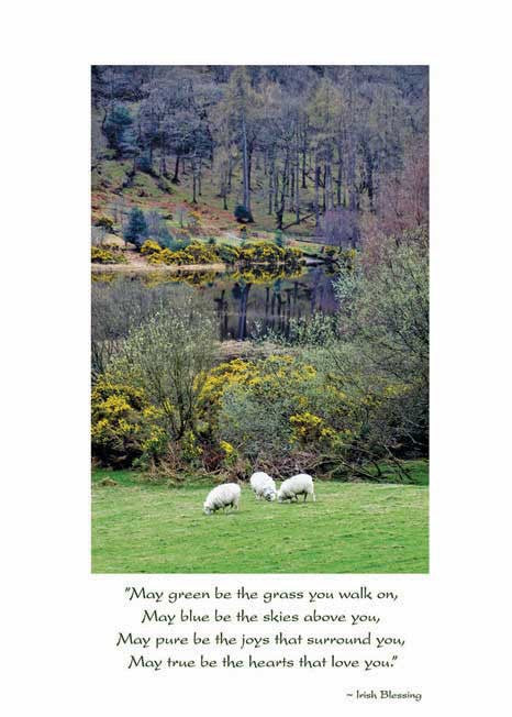 Irish Sheep Get Well Card