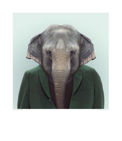Zoo Portrait - Elephant-DEVOTEDTO