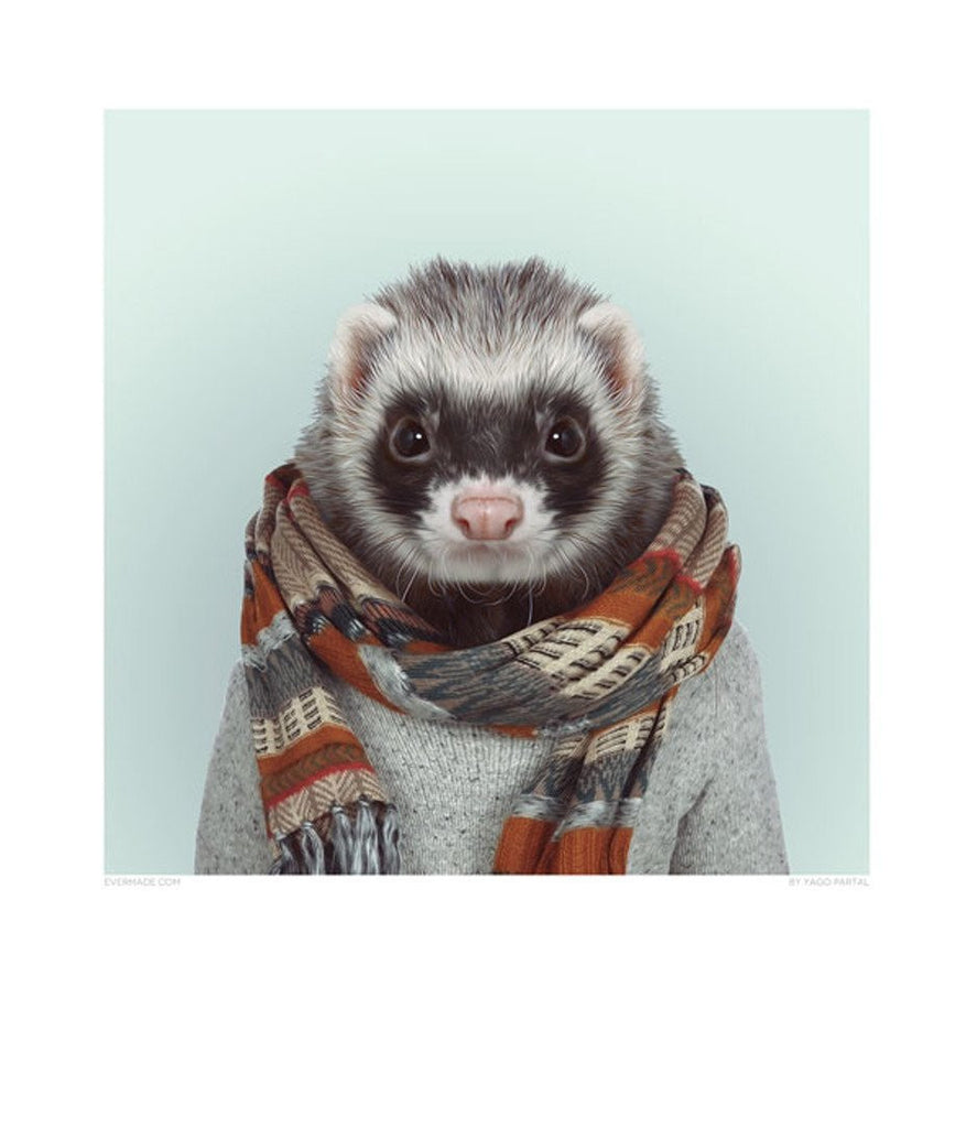 Zoo Portrait - Ferret-DEVOTEDTO