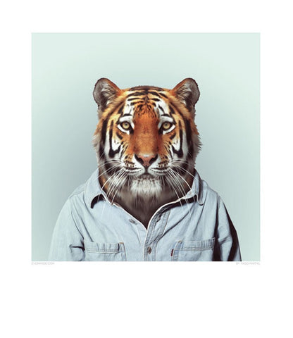 Zoo Portrait - Tiger-DEVOTEDTO