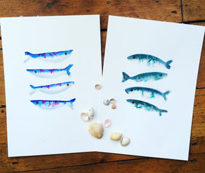 Mackerel Illustration - unframed giclee print