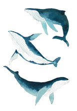 Load image into Gallery viewer, Humpback Whale Illustration - unframed giclee print