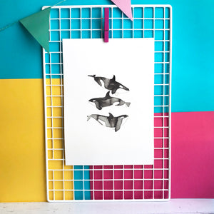 Orca Whale Illustration - unframed giclee print