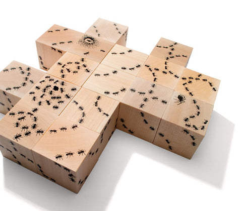 Ant Trail Blocks