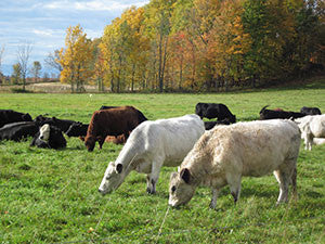 FREE ENROLLMENT - FARM 2 BRICK - LOCAL GRASS FED (PICK UP OR DELIVERY)
