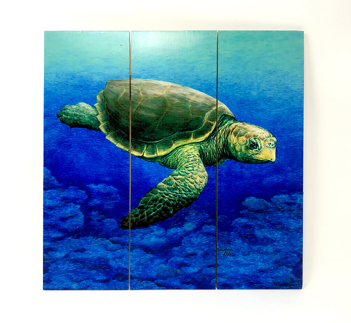 Loggerhead Turtle Wall Art