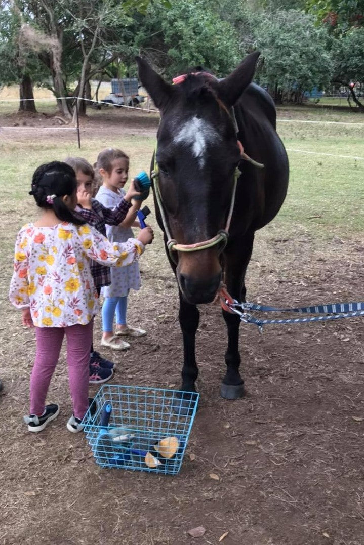 Local Kindy and School Visits