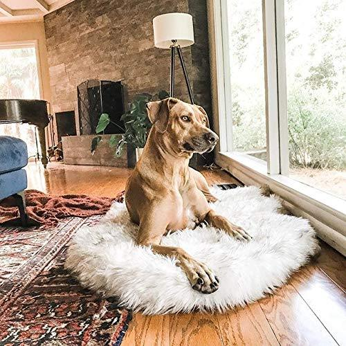 Pup Blanky-Orthopedic Pet Cushion - PetsDoo