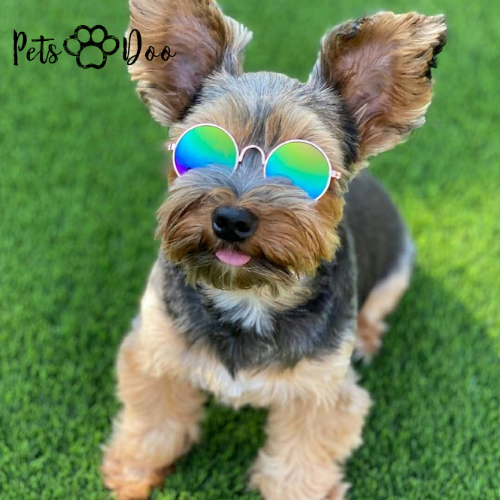 Trendy Pet Sunnies - PetsDoo