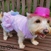 Small Dogs Dresses - PetsDoo