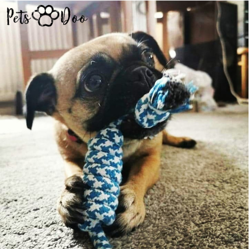 Dog Rope Toy - PetsDoo