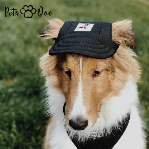 Summer Dog Cute Print Cap - PetsDoo