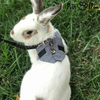 Multipurpose Rabbit Harness Leash - PetsDoo