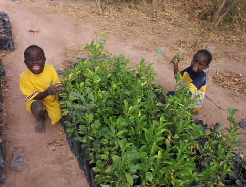 why planting trees is important - eminence organics forests for the future - the facial room plants 100,000 trees