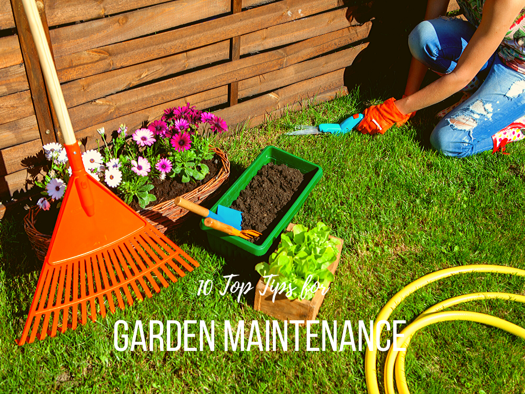 10 Top Tips For Garden Maintenance