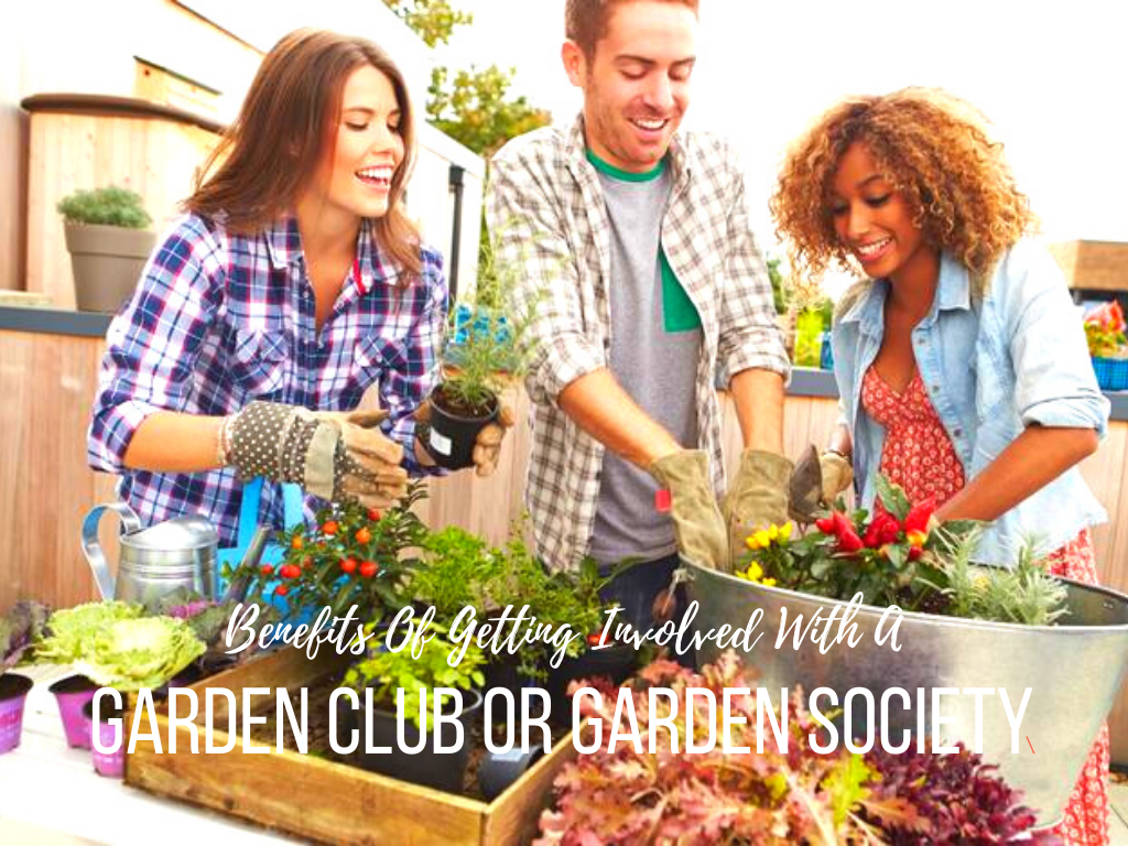 Benefits Of Getting Involved With A Garden Club Or Garden Society