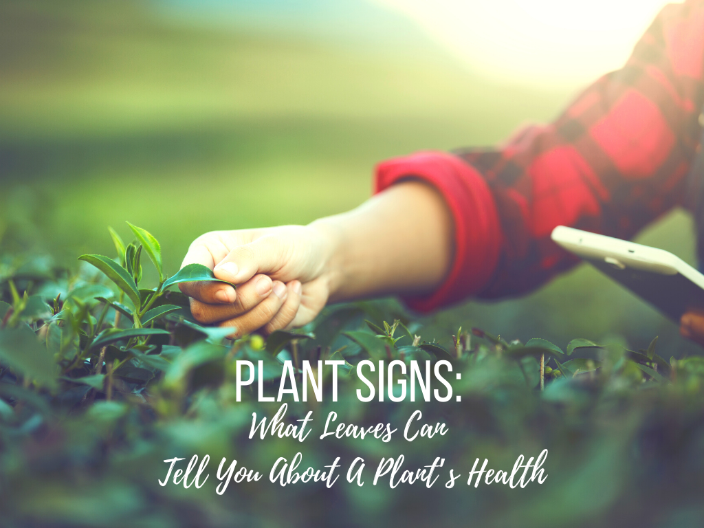 Plant Signs: What Leaves Can Tell You About A Plant's Health