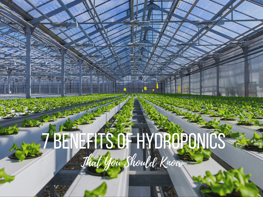 7 Benefits of Hydroponics That You Should Know
