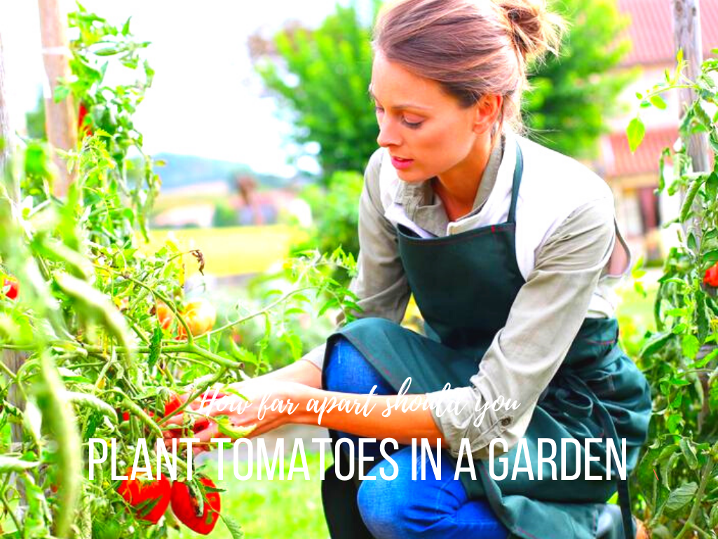 How Far Apart Should You Plant Tomatoes In A Garden