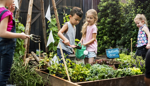 Environmental Benefits of Gardening