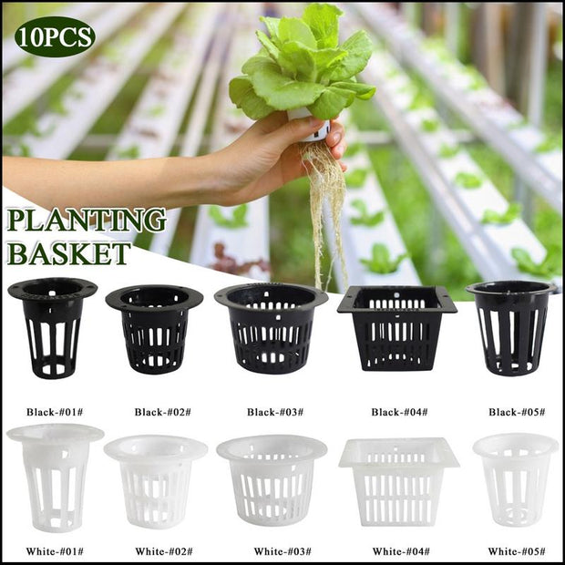 Planting Cups