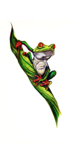 Red Eyed Tree Frog (8.5''x11'')