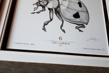 Load image into Gallery viewer, The Ladybug (#1 of 100 (5.5'' x 7.5'') Framed Edition