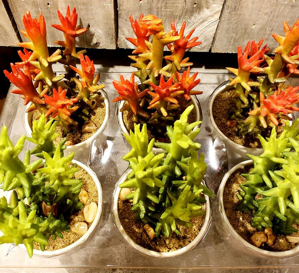 Colorful Succulants