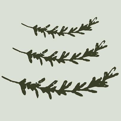 Drawing of sprigs of rosemary