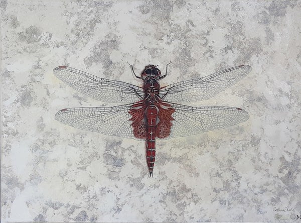 Catherine Mills Art Bordeaux Dragonfly | Available at artfully.ca