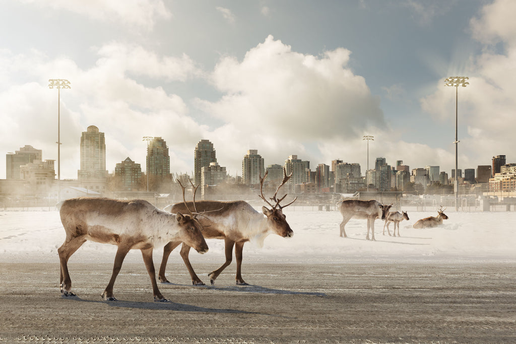 Kevin Lanthier Artwork 'Caribou Migrants' Available For Sale @ artfully.ca