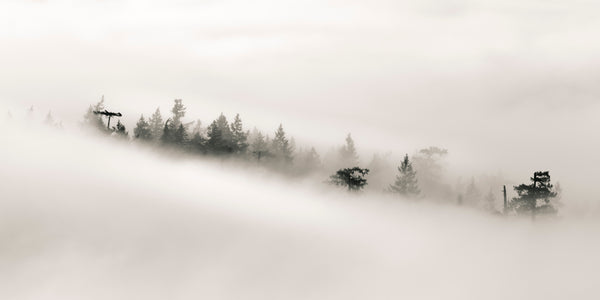 Lesley MacGregor Artwork 'Eddies in the Fog I' Available For Sale @ artfully.ca