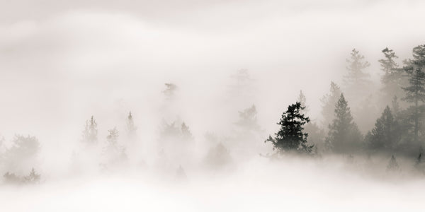 Lesley MacGregor Artwork 'Eddies in the Fog II' Available For Sale @ artfully.ca