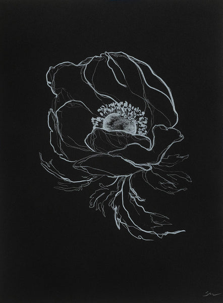 Sarah Mulder Art Anemone Study #4 | Available at artfully.ca