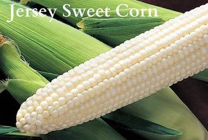 New Jersey Sweet Corn-on-the-Cob