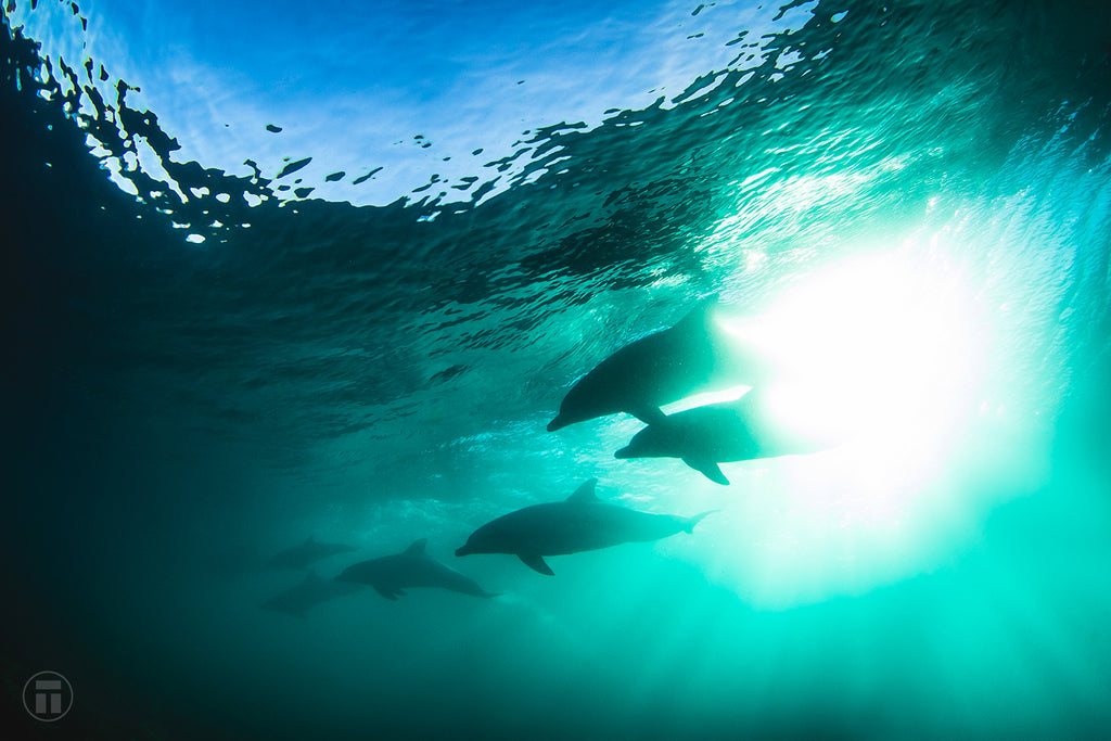 Seven dolphins surfing by Thurston Photo