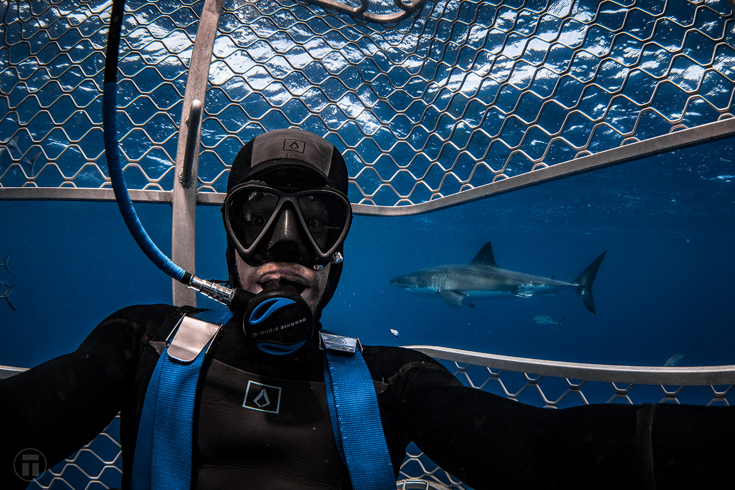 Philip Thurston Shark Cage Diving