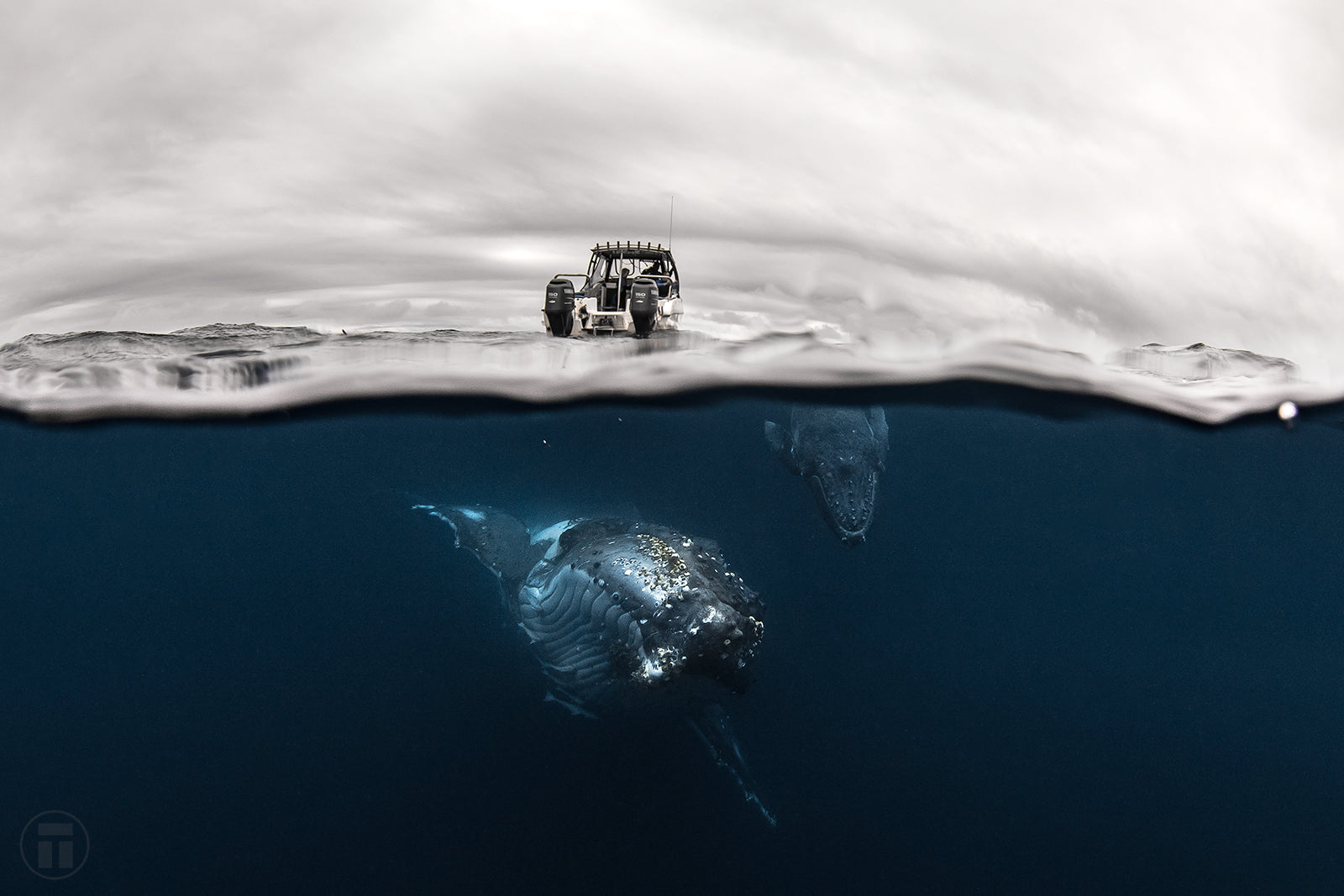 Whales Underwater with Thurston Photo