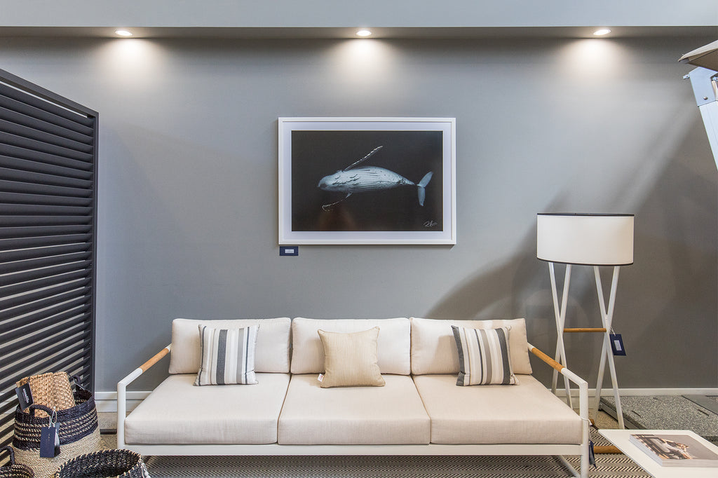 Majesty, humpback whale framed print on display at Harbour Outdoor furniture outlet in Sydney