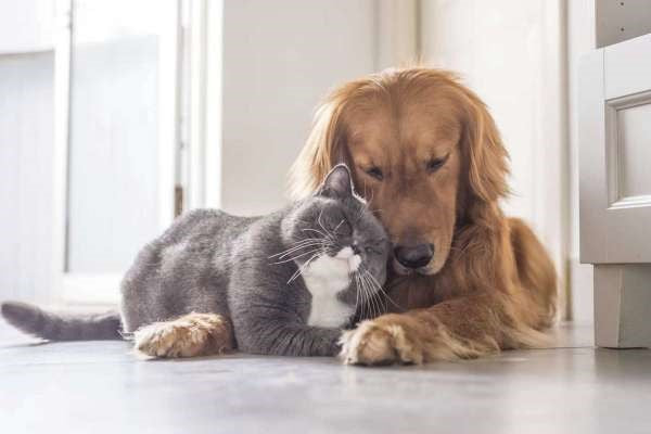A cat a dog for no cruelty to animals