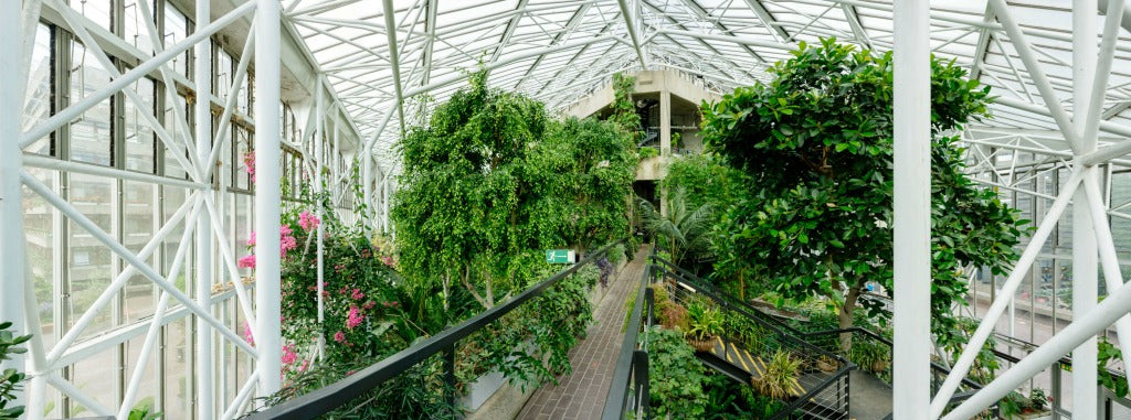 barbican conservatory // mahabis journal