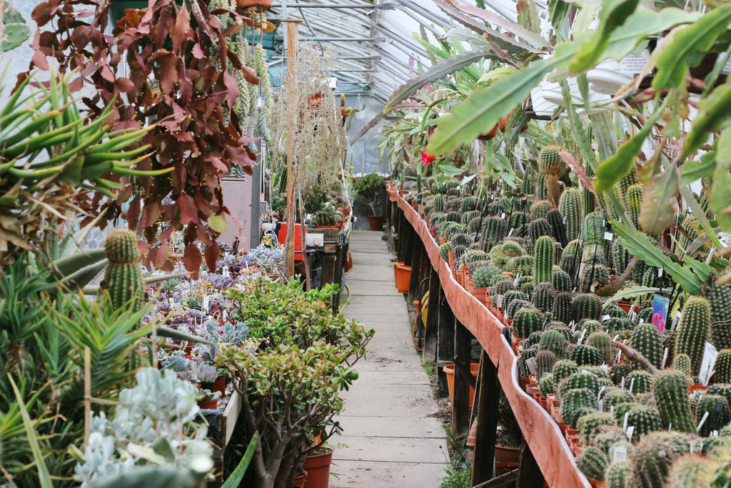 abbey brooke cacti nursery // mahabis journal
