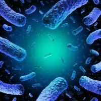 Resolve Listeria Outbreaks Without Chemicals