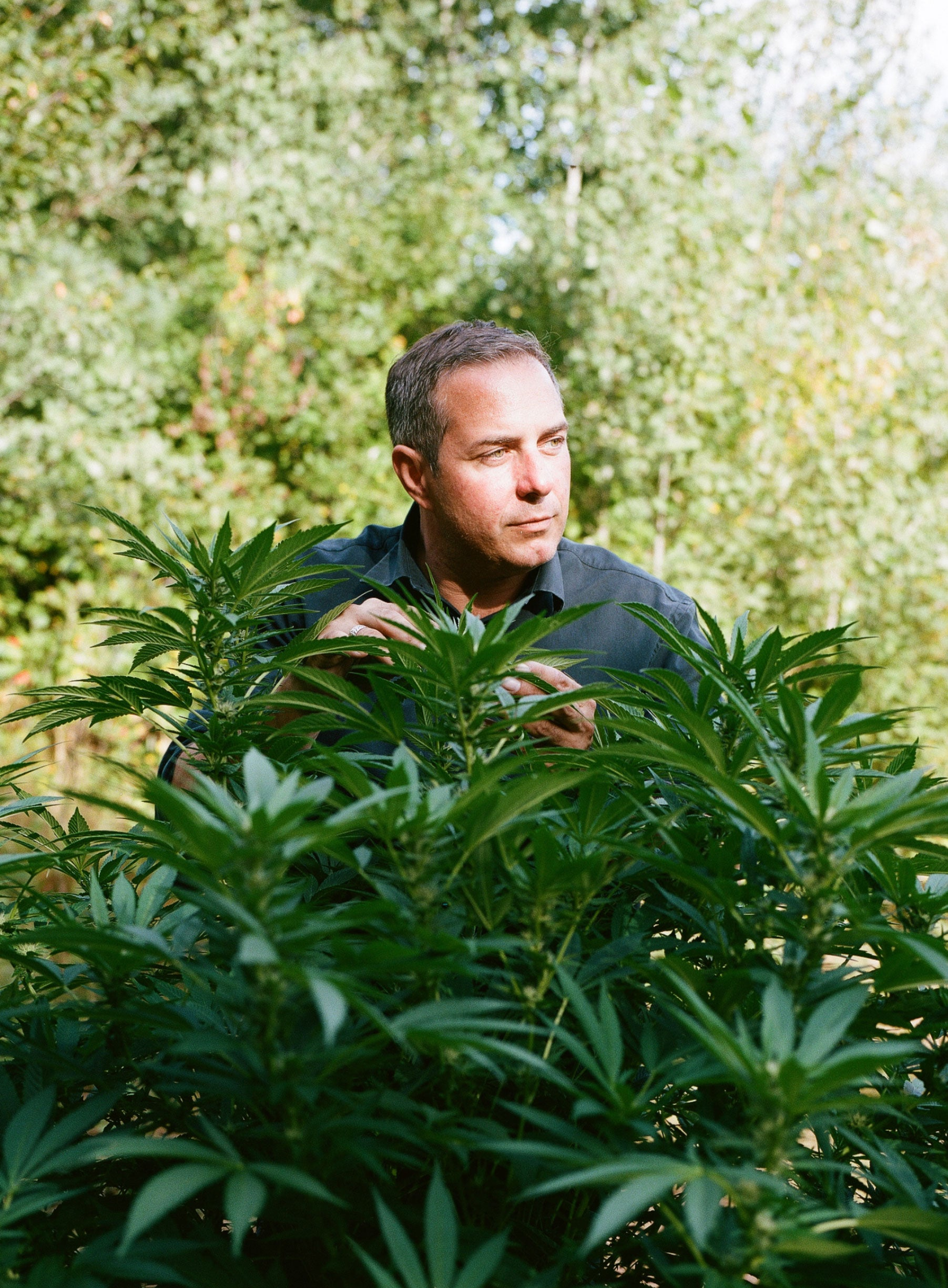 Andrew Robinson with cannabis plant