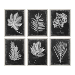 CORNERSTONE HOME INTERIORS - FOLIAGE (SET OF 6)