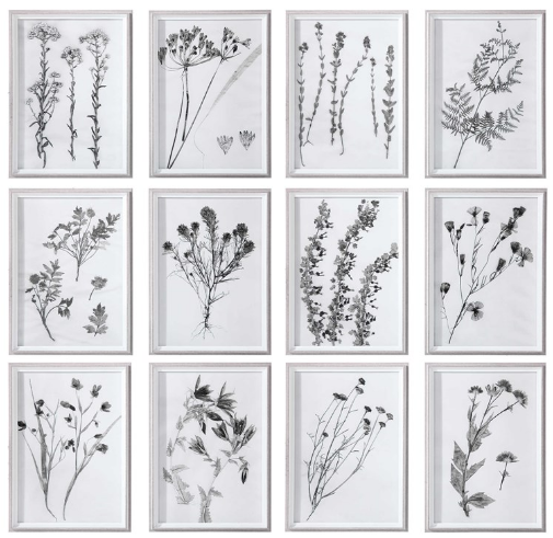 CONTEMPORARY BOTANICALS FRAMED PRINTS S/12