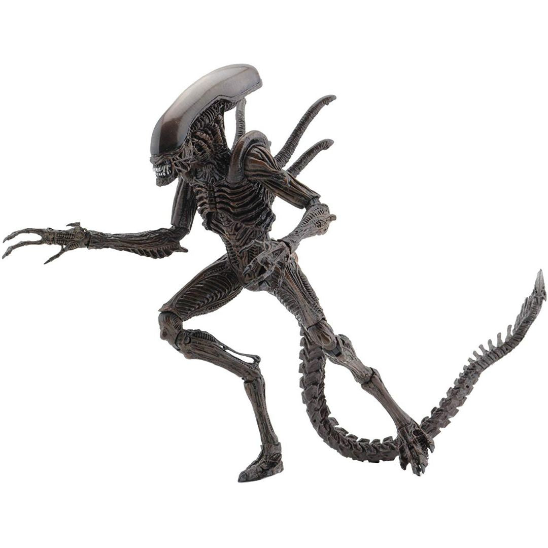 Alien Resurrection Xenomorph Warrior Figure by Neca -NECA - India - www.superherotoystore.com